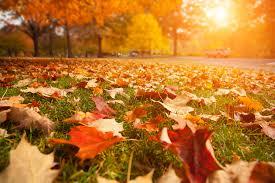 Làm sạch nhà ở vào mùa thu – không gian sạch